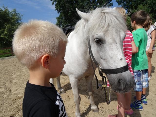 Koń jaki jest każdy widzi